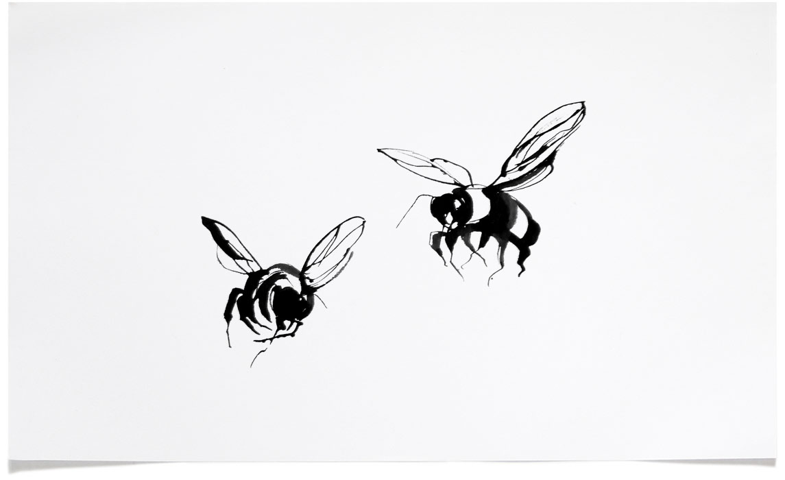 Bee - animal wildlife Illustrations - Ink Illustration by Eri Griffin