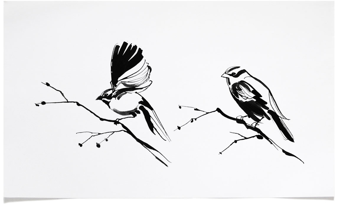 Garden Birds - animal wildlife Illustrations - Ink Illustration by Eri Griffin