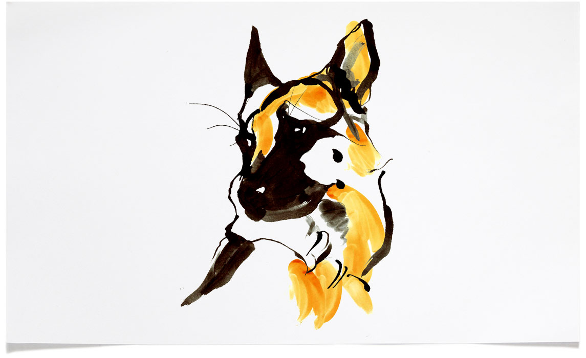 German Shepherd Dog - animal wildlife Illustrations - Ink Illustration by Eri Griffin