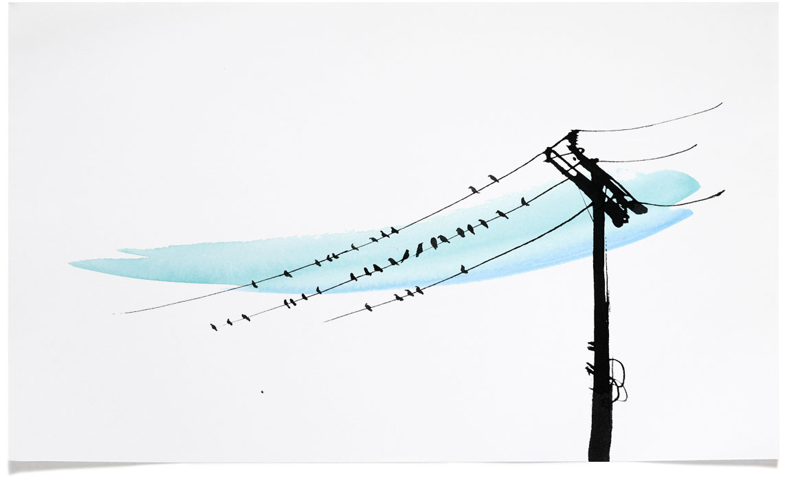 Birds on Wire - animal wildlife Illustrations - Ink Illustration by Eri Griffin